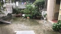 Nghệ An: Người dân khốn khổ vì nhà trẻ bịt cống thoát nước gây ô nhiễm môi trường