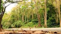 Vẻ đẹp thanh bình của miền Tây xứ Nghệ mùa cây thay lá