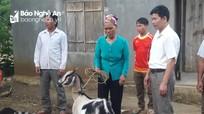 Các hoạt động thiết thực giúp đỡ người nghèo, học sinh khó khăn ở Nghệ An