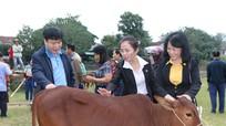 Chủ tịch Ủy ban MTTQ tỉnh trao tặng bò sinh sản cho hộ nghèo ở Tân Kỳ