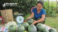 Dưa sạch của đồng bào Thái 'đắt hàng' đạt trăm triệu mỗi ha