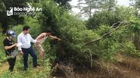 Sạt lở đất vườn, đất sản xuất và uy hiếp an toàn nhà dân ở hồ sông Sào
