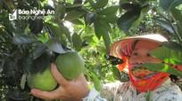 Hạn chế tối đa việc người dân trồng cam tràn lan