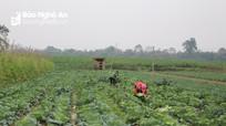 Nghệ An đưa một số cây trồng mới vào sản xuất trong vụ đông 2019