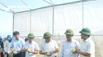 Nghệ An xây dựng 12 mô hình điểm về sản xuất, chế biến nông sản thực phẩm an toàn