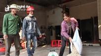 Giá rớt thảm, nông dân 'vựa' hành Nghệ An lỗ nặng