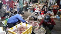 Hải sản Nghệ An 'đắt khách', giá tăng cao trong dịp nghỉ lễ