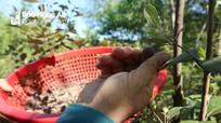 Nông dân Nghệ An đưa 'lộc rừng' về vườn nhà