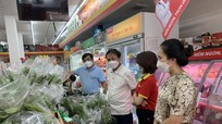Các siêu thị sẽ bao tiêu 10 tấn rau/ngày cho nông dân Nghệ An
