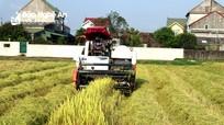 Nghệ An quản lý chặt máy gặt thuê mùa dịch