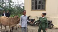Bàn giao bò giống Quỹ thiện tâm của tập đoàn Vingroup