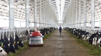 Vinamilk nhập 200 con bò sữa A2 thuần chủng đầu tiên từ New Zealand