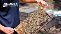 Buồn vui đời nuôi ong du mục
