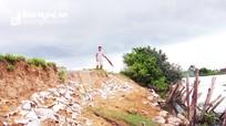 Người nuôi tôm Nghệ An thấp thỏm bởi đê ngăn mặn sạt lở nghiêm trọng