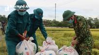 Bộ đội giúp dân trong vùng dịch ở Nghệ An thu hoạch lúa