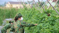 Bộ Chỉ huy Quân sự tỉnh thu mua nông sản phục vụ cho 'gian hàng 0 đồng'