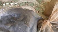 Nghệ An: Phát hiện 3 cá thể kỳ đà rất quý hiếm trên xe khách
