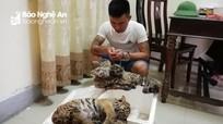 Bắt vụ vận chuyển, mua bán trái phép 5 cá thể hổ ở Nghệ An