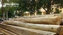 Phát hiện gần 8 khối gỗ vô chủ ở triền núi