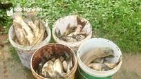 Nghi án kẻ xấu đổ thuốc trừ sâu xuống ao cá ở Đô Lương