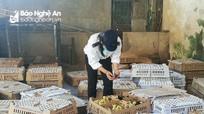 Bắt vụ vận chuyển gần 12.000 con gia cầm chưa kiểm dịch