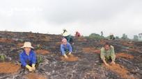 Tân Kỳ trồng trên 700 ha rừng vụ xuân