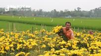 Nông dân Yên Thành mất trắng hàng chục triệu, để hoa thối rữa ngoài đồng