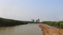 Nhiều diện tích rừng phòng hộ ven sông Mơ bị biến thành hồ nuôi tôm
