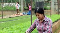 Nghệ An: Đề xuất các giải pháp để lâm nghiệp bền vững