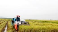Yên Thành khẩn trương thu hoạch trên 4.500 ha lúa chạy lụt