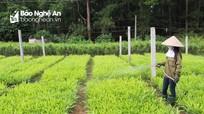 Lộ trình giao rừng cho hộ gia đình, cá nhân, cộng đồng ở Nghệ An