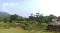 Nghệ An: 10.038 ha đất rừng chuyển nhượng trái phép