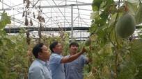 Hiệu quả từ mô hình trồng dưa leo trong nhà lưới ở Yên Thành