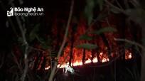 Đã khống chế được lửa rừng ở Thanh Chương