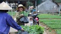 Nghệ An: Thí điểm cấp Chứng chỉ rừng  bền vững cho trên 10.000 ha rừng