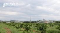 Nghệ An: Ứng dụng công nghệ 4.0 trong sản xuất nông nghiệp thông minh
