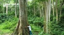 Tìm nguyên nhân để có biện pháp chống mất rừng, suy thoái rừng ở Bắc Trung bộ