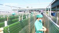 Công bố nhận diện thương hiệu tảo xoắn Việt Nam - Vastcom