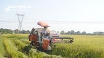 Thu hoạch lúa giúp các xã bị giãn cách