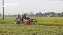 Yên Thành thu hoạch lúa hè thu đảm bảo an toàn chống dịch