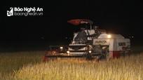 Gặt lúa đêm ở các vùng cách ly của Nghệ An