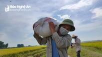 Những chuyến xe tình nguyện chở lúa mùa dịch ở Yên Thành