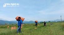 Chung tay giúp nông dân Yên Thành tiêu thụ dưa hấu, dưa chuột