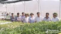 Liên minh HTX Việt Nam hỗ trợ Nghệ An 4 mô hình phát triển sản xuất