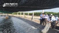 Công ty Nhật Bản khảo sát, nghiên cứu nuôi tôm công nghệ cao tại Nghệ An