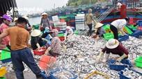 Nghệ An: 11 tháng khai thác được 135 nghìn tấn hải sản