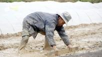 Nông dân Nghệ An xuống đồng trong rét mướt