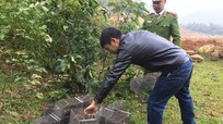Thả 33 cá thể dúi về rừng tự nhiên ở Nghệ An