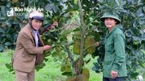 """Vườn cây ăn quả ở Nam Đàn """"níu du khách"""""""