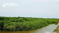 Đề xuất 3 mô hình bảo vệ môi trường vùng bờ ở Nghệ An